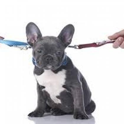 Droit de la famille : Sort de l'animal de compagnie en cas de divorce de son ou ses propriétaires